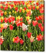 Brushed Tulips Canvas Print