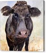 Brutus - Black Angus Cattle Canvas Print