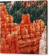 Bryce Canyon - Lone Tree Canvas Print