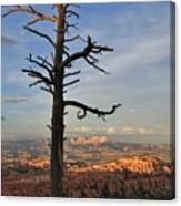 Bryce Canyon Dead Tree Sunset 3 Canvas Print