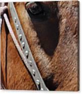 Bryce Canyon Horse Portrait Canvas Print