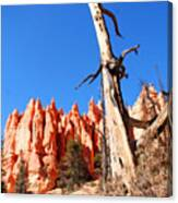 Bryce Canyon Lonely Tree Canvas Print