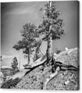 Bryce Canyon Treescape Canvas Print