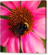 Bumble On A Pistil Canvas Print