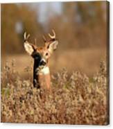 Buck In The Weeds Canvas Print