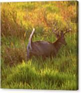 Buck On The Run  Canvas Print