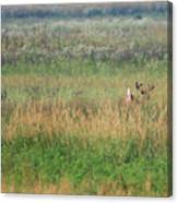 Buck Running In Field Canvas Print
