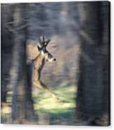 Buck Running Thru The Woods Canvas Print
