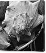 Bucket Of Sea Shells Canvas Print