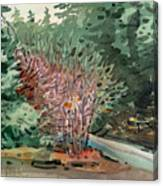 Buckeye And Redwoods Canvas Print