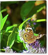 Buckeye Butterfly On The Move 1 Canvas Print