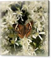Buckeye On Wildflowers Canvas Print