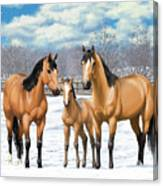 Buckskin Horses In Winter Pasture Canvas Print