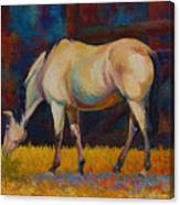 Buckskin Canvas Print
