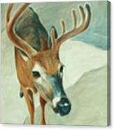 Bucky Canvas Print