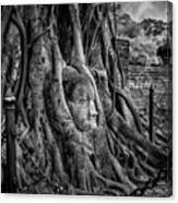Buddha Head Ayutthaya Canvas Print