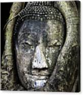 Buddha Head In Banyan Tree Canvas Print