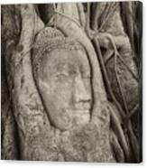 Buddha Head In Tree Canvas Print