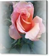 Budding Beauty Canvas Print