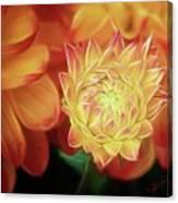 Budding Dahlia Canvas Print