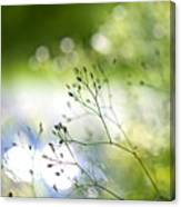 Budding Plant Canvas Print