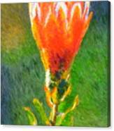 Budding Protea Canvas Print
