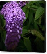 Buddleia Flower Canvas Print
