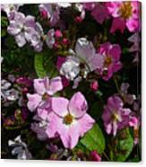 Buds And Petals- Pink Roses- Rose Bush- Floral Art Canvas Print