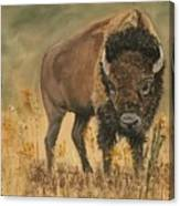 Buff Buffalo  Canvas Print
