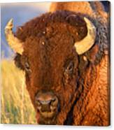 Buff In The Badlands Canvas Print