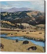 Buffalo By A Stream Canvas Print