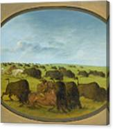 Buffalo Chase With Accidents Canvas Print