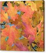 Buffalo Fall Leaves Canvas Print