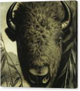 Buffalo Head Canvas Print