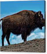 Buffalo In Profile Canvas Print