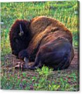 Buffalo In The Badlands Canvas Print