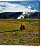 Buffalo In Yellowstone Canvas Print