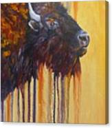 Buffalo Mania Canvas Print
