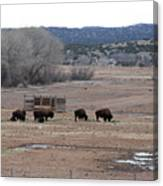 Buffalo New Mexico Canvas Print