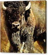 Buffalo Poster Canvas Print