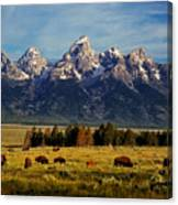 Buffalo Under Tetons 2 Canvas Print