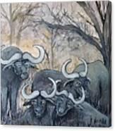 Buffaloes In The Bushveld Canvas Print