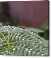 Bug Homestead Canvas Print