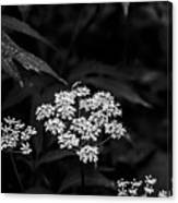 Bug On Flowers Black And White Canvas Print