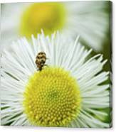 Bugged Flower Canvas Print