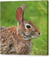 Bugs Bunny.. Canvas Print