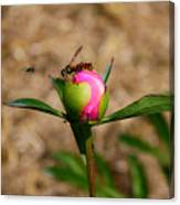 Bugs Wanting The Same Flower Canvas Print