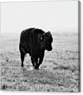 Bull After Ice Storm Canvas Print