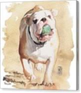 Bull And Ball Canvas Print