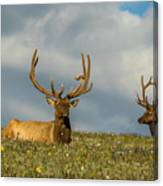 Bull Elk Friends For Now Canvas Print
